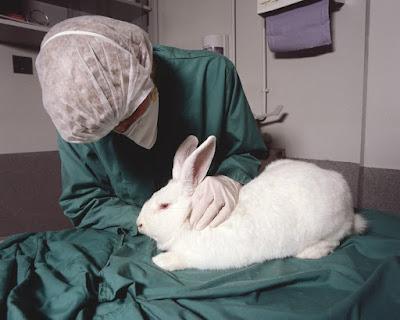 memelihara Kelinci percobaan di rumah