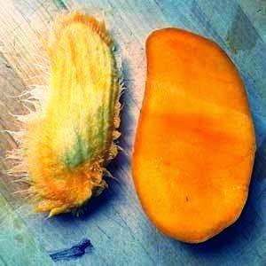 biji buah mangga