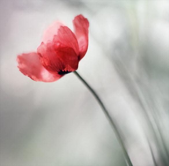 beautiful macro flower photography