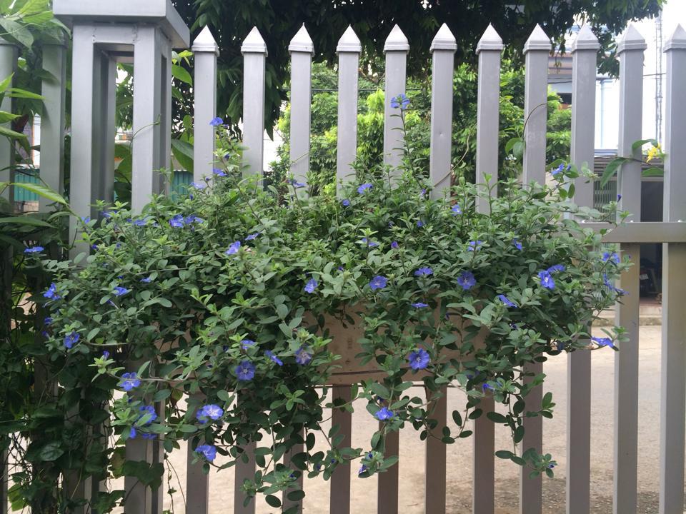 Chậu móc treo chậu hoa dài thông minh trang trí hàng rào