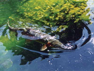 Kỹ năng câu cá: Học đặc tính sinh sống của cá