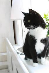 Vår katt Alice