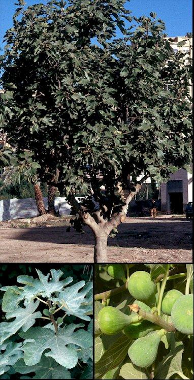 pflanzen und mehr plantas y mas plants and more. Black Bedroom Furniture Sets. Home Design Ideas