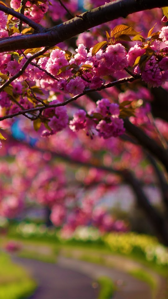 Spring Purple Flowers Tree Alley Bokeh  Galaxy Note HD Wallpaper