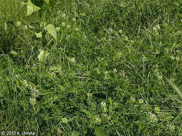 Precisely What Is Astragalus? | Accretive Health