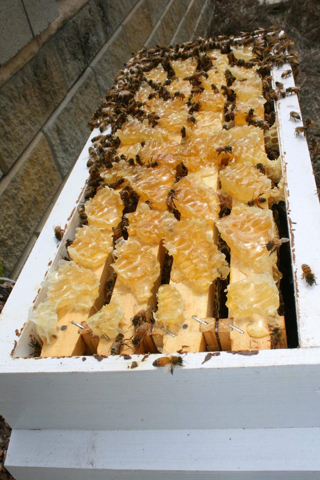 Productive Beehive burr comb