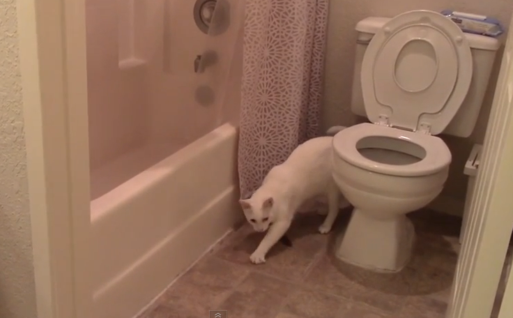 how to get cats to stop peeing and pooping on the carpet