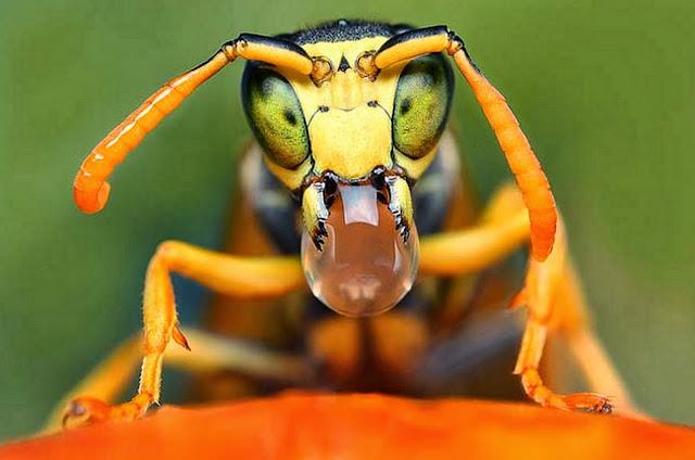 artisticas-de-insectos
