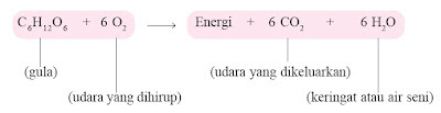 Reaksi pembakaran gula dalam tubuh