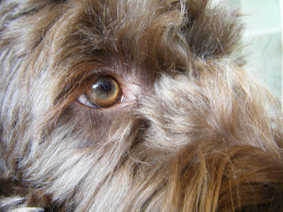 closeup of Alfie's soulful eye looking upward