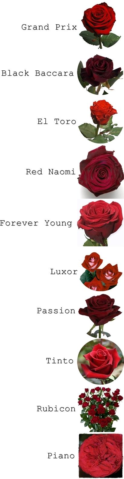 röda rosor, namn på röda rosor, passion ros, red naomi ros, alla hjärtans dag, blommor till alla hjärtans dag