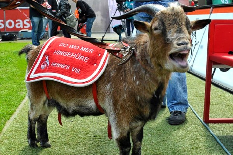 Billygoat Hennes changes for 12 million from 1. FC Cologne Bayern Munich