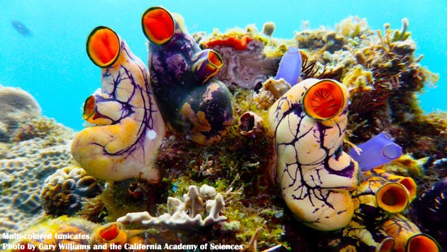 100 New Marine Species had been Discovered in Philippines by American Scientists