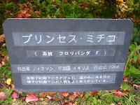 須磨離宮公園 王侯貴族のバラ園 プリンセス・ミチコ