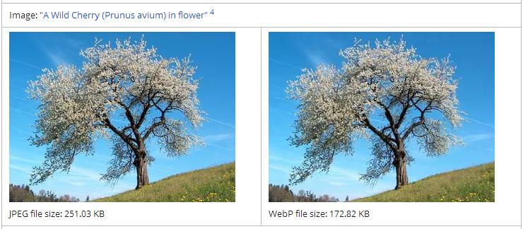 Cara Konversi Format Gambar WebP Ke PNG Atau JPG