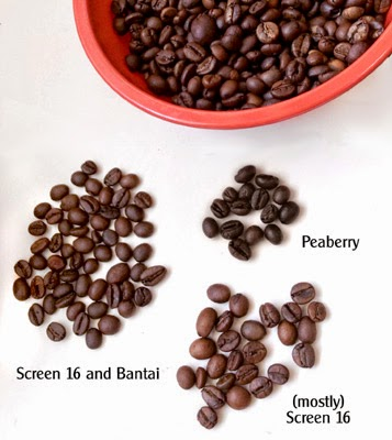 Master Roast Robusta Dream