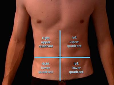 Quadrant Body Anatomy and Phy...