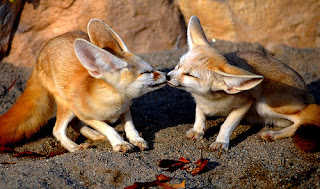 Funny Cute Animals Kissing