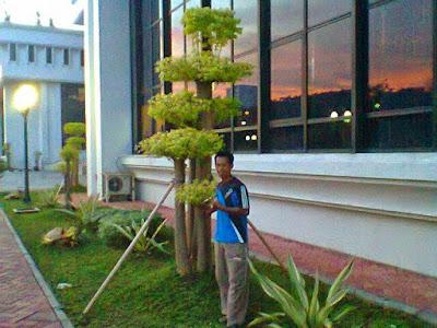 Tukang Taman Surabaya Tanaman Hias Anting Putri