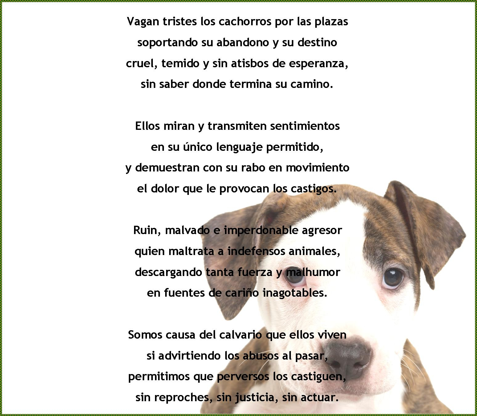 Poemas De Animales En Espanol