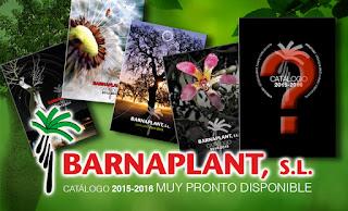 Edicion del nuevo catalogo de Barnaplant