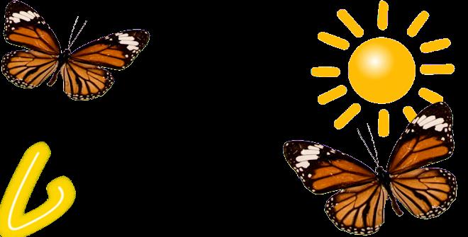 Mariposas de verano