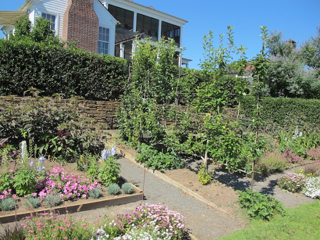 nwafoodie #bean2blog PAllenSmith garden at Moss Mountain Farm soybean