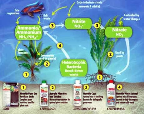Nitrogen cycle aquascape aquarium freshwater aquarium for Nitrite in fish tank