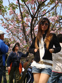 Cherry Blossoms at Nanxi Hill Park, Guilin China