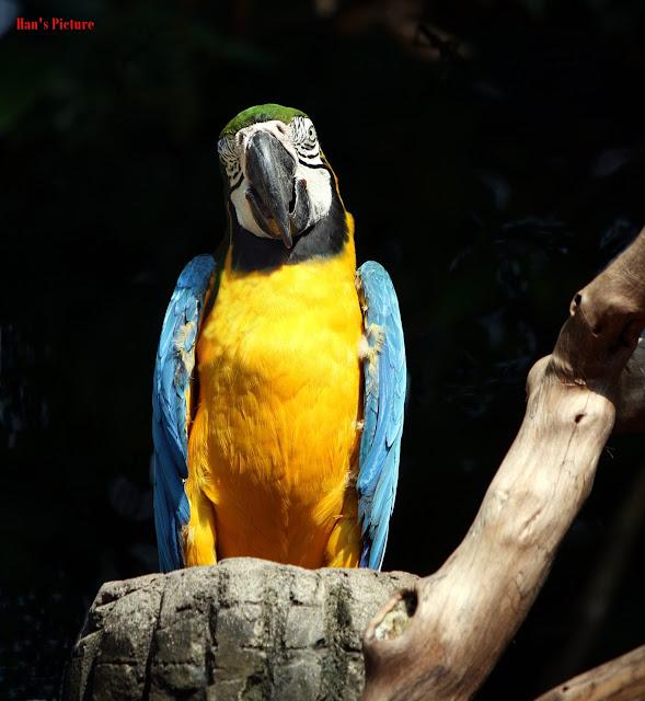The Old Bird