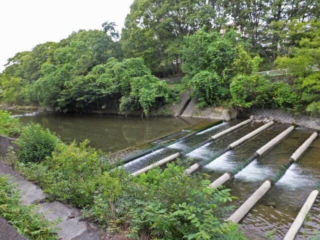 小畑川河川敷公園の両脇を散歩する方々が多い。