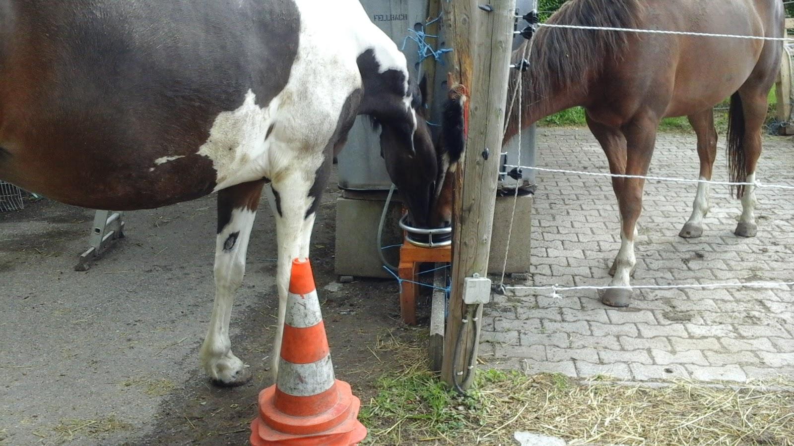 Pferde Blog: Offenstallproblem: Kein Strom, kein fließendes Wasser ...