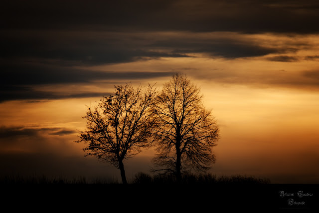 Aufnahmen von 2 Bäumen bei Sonnenuntergang