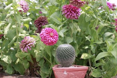 Sladar Gai bên một loài hoa đẹp