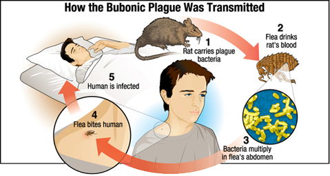 Health Inspector's Notebook: Plague outbreak in Colorado - Can we ...