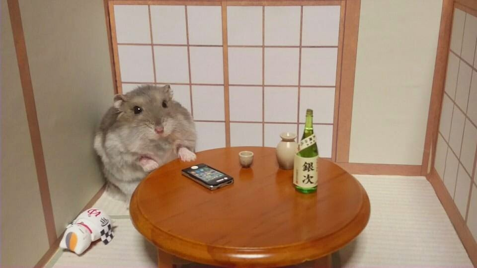 Adorable Hamster Bartenders Serving Tiny Food And Drinks Pics - Hamster bartenders cutest thing youve ever seen
