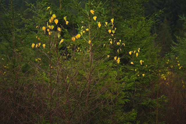 Dunkles Bild mit Herbstblättern Andreas Blauth Landschaftsfotografie