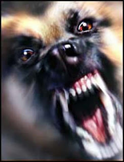 Dog Training Basics On Aggression