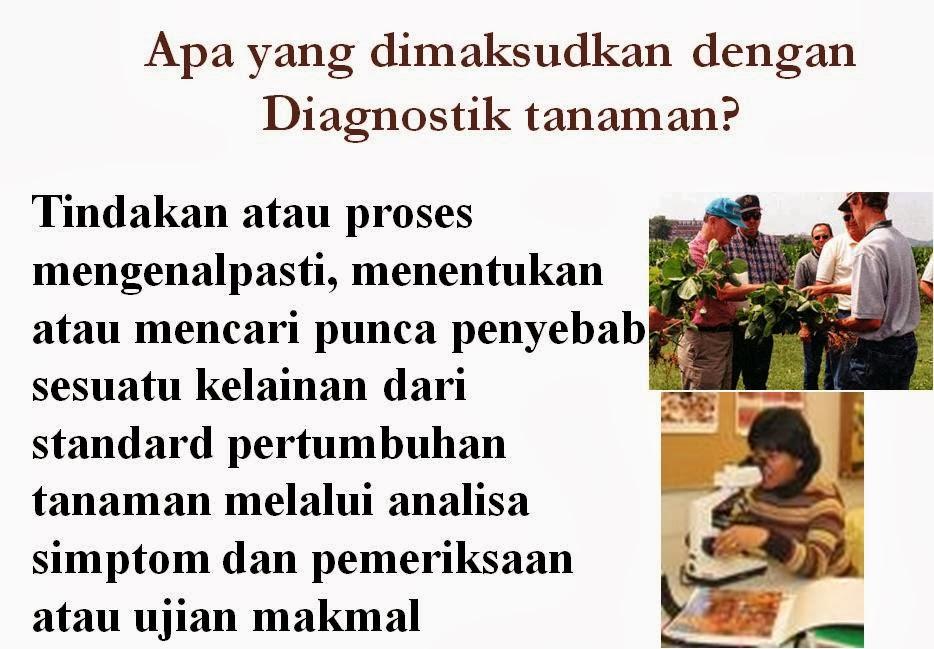 Diagnostik Tanaman