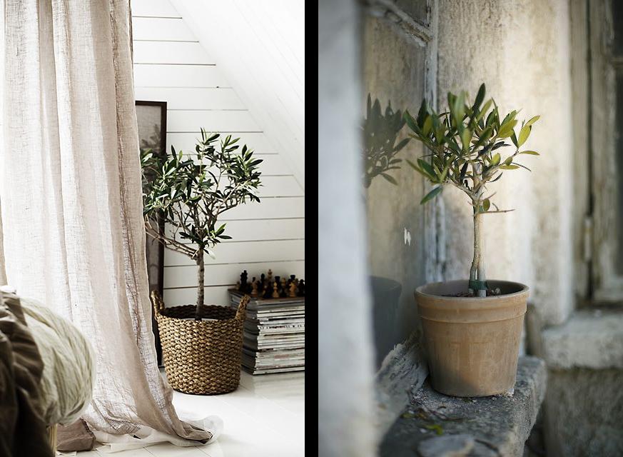 La fabrique d co une plante un style de d co for Decoration interieur en anglais