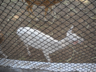 white deer ahmedabad zoo