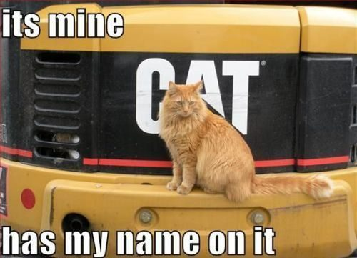 It's Mine, Has My Name On It - CAT