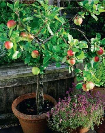 Cottage Garden How To Plant Veggies