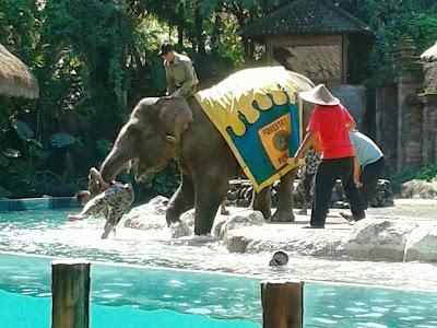 Seekor gajah menolong manusia (Ilustrasi)