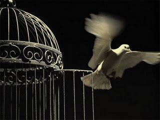http://4.bp.blogspot.com/-pQvK1VaJSkg/TcLl1MKPdNI/AAAAAAAAIOQ/RI_mXyQocXA/s1600/bird%2Bout%2Bof%2Bits%2Bcage.jpg