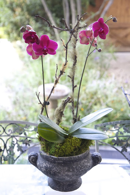 Magenta Orchid with Slate Blue Urn; How to Landscape an Orchid; Nora's Nest