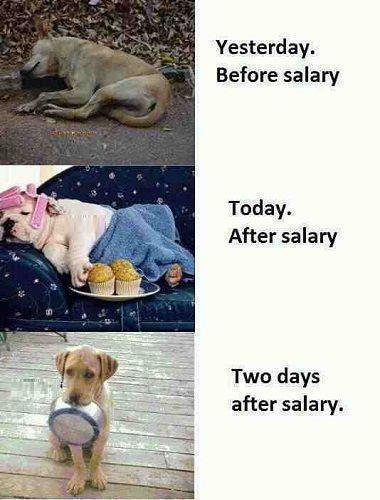 Funny Salary Pictures