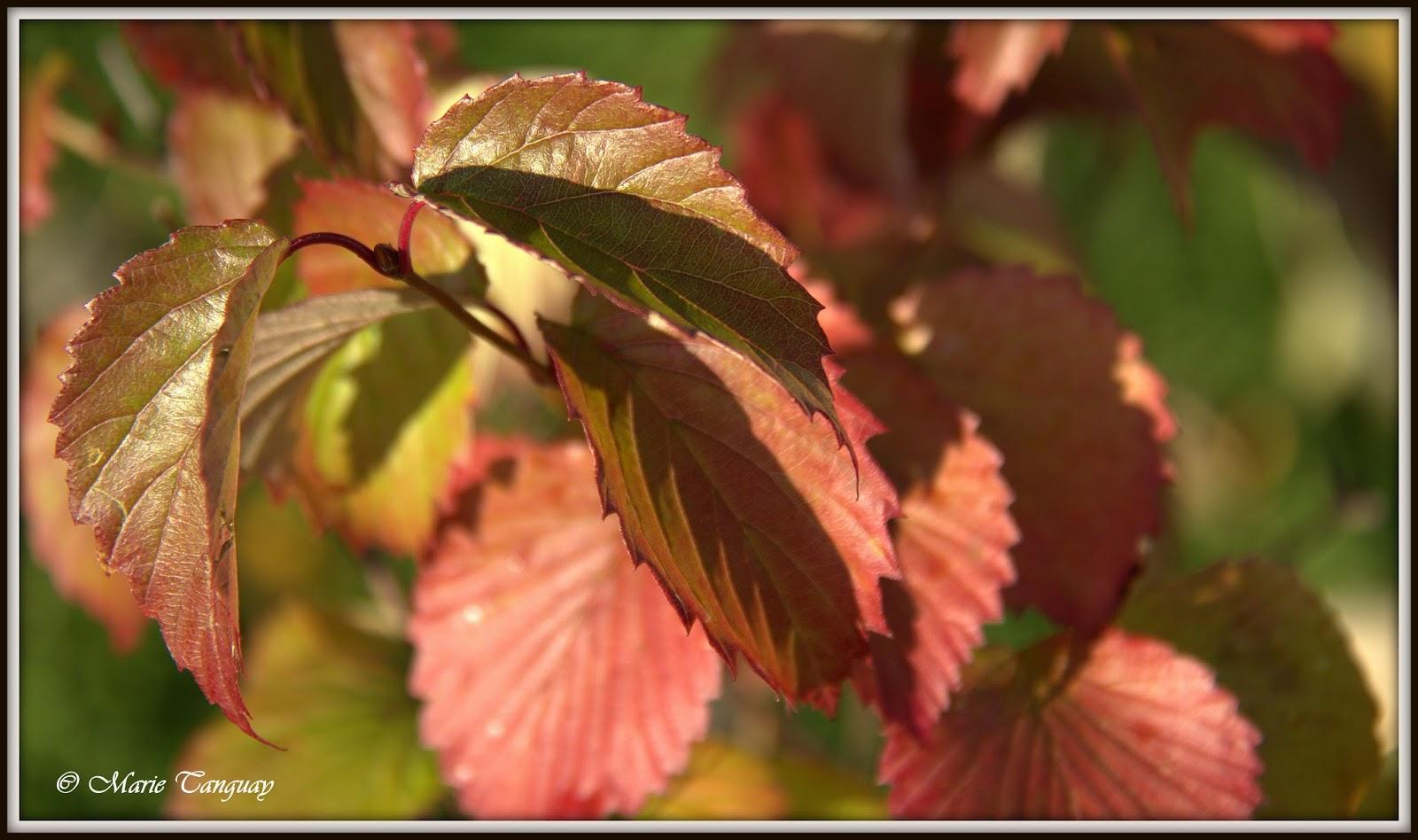 Au fil du temps automne for Portent feuilles