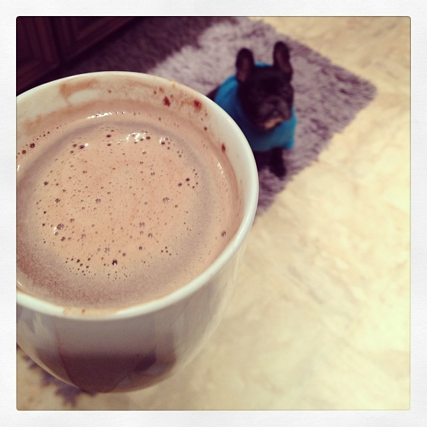 hot coco, french bulldog