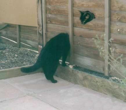 gambar ilusi kucing comel kelakar
